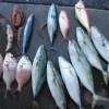 三浦海岸ビーチBBQと釣りと海水浴と楽しい仲間