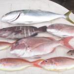 釣りの皆さんは美味しいお魚たくさん